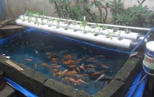 foto-gambar-akuaponik-nft-kolam-terpal-aquaponik